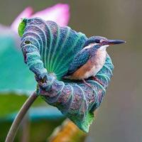 La sophrologie donne des ailes